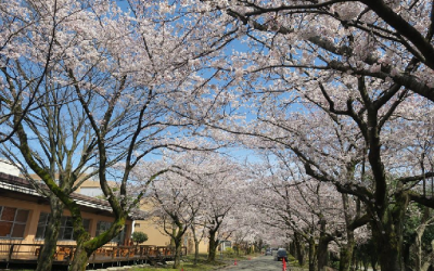 ĐH Công nghệ Nagaoka dừng kỳ thực tập hè 2020