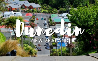 Dunedin – Thành phố du học được yêu thích tại New Zealand