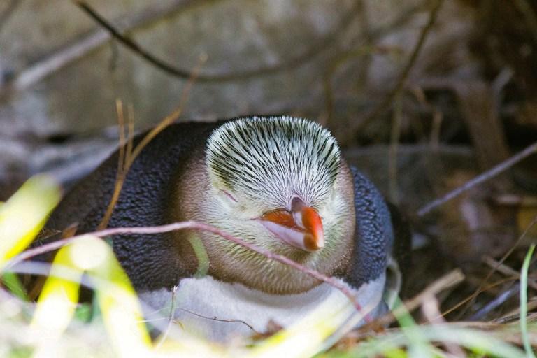 Dunedin - thanh pho du hoc duoc yeu thich tai New Zealand